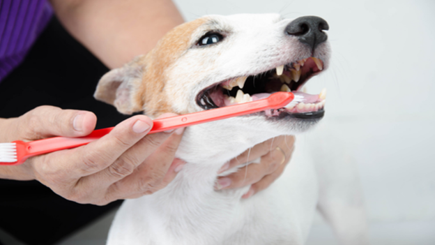 dog dental hygiene tips from pet microchipping facts from liberty lake veterinary center in washington